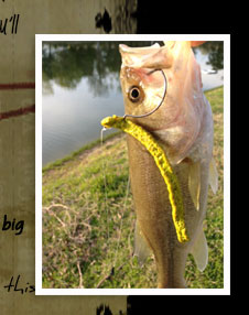"Largemouth Bass caught with ""Lightnin' Bug"" Fish Food Worm"